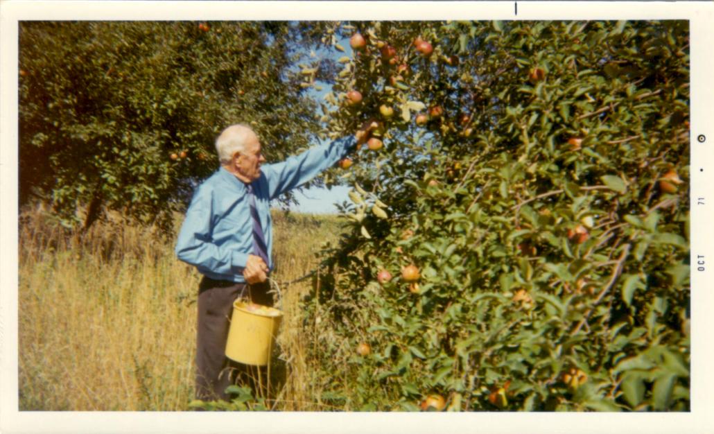 Carl Wallin - Apple Orchard