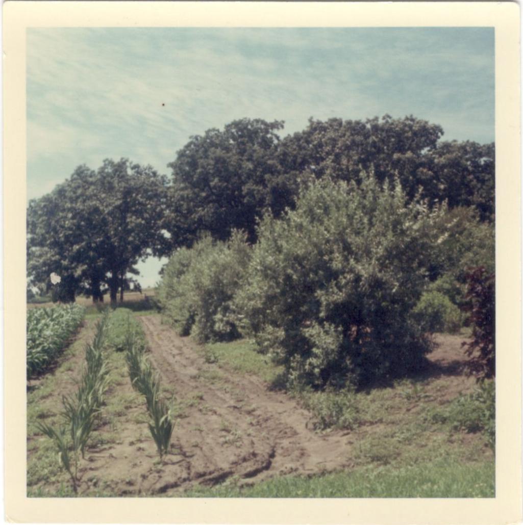 Farming on the Wallin Family Farm